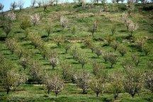192 هکتار باغ میوه در اراضی شیب دار دامغان ایجاد شد