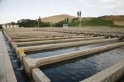 پرورش دهندگان ماهی در کردستان 21 میلیارد ریال تسهیلات دریافت کردند