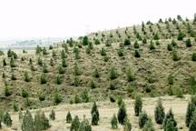 جنگل کاری در 400 هکتار از اراضی اراک آغاز شد