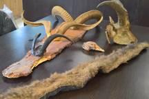 اجزای حیوانات وحشی از متخلف زیست محیطی در شهریار کشف شد