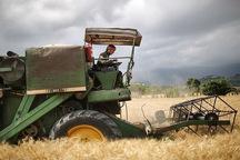 نرخ برداشت محصولات پاییزه در گلستان اعلام شد