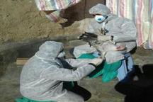 پایش بیماری آنفلوآنزای فوق حاد پرندگان در 175 واحد پرورش طیور در تکاب