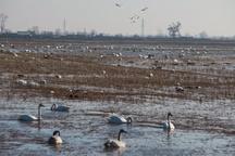 قرق شکنی برای شکار پرندگان در مازندران ممنوع شد