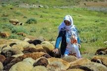 بیش از 82 هزار خانوار روستایی در آذربایجان غربی بیمه هستند