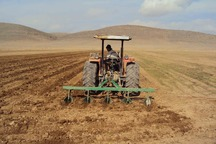 نیم میلیون هکتار اراضی کردستان زیر کشت پاییزه می رود