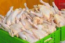 11.5 تن مرغ گرم در گناوه توزیع شد
