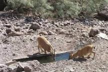 چشمه های مناطق حفاظت شده تاکستان ضدعفونی و پاکسازی شدند