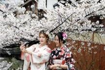 عکس/ بهار با طعم کیمونو