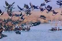 زنجان عاری از مرگ و شکار پرندگان مهاجر
