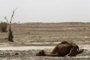 سایه سنگین خشکسالی در کرمان