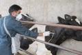 ماموران دامپزشکی 107هزار راس دام را در ابرکوه ایمن سازی کردند