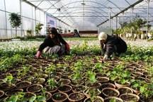 11 واحد کشاورزی  با اشتغالزایی 148 نفر امسال درهمدان راه اندازی شد