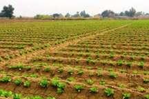 ضرورت کشت محصولات کم آب طلب در گلستان هدایت زراعت به آب سبز