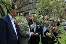 سرما به باغ های  17 استان کشور خسارت وارد کرد
