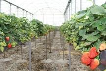نخستین زون گلخانه ای خراسان شمالی در گرمه ایجاد می شود