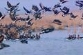 شکار پرندگان مهاجر و وحشی در زنجان ممنوع است