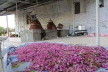 مجوز فرآوری ۲۸ هزار و ۹۲۳ تن گیاهان دارویی در استان مرکزی صادر شد