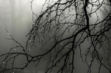 سامانه بارشی جدیدی در کهگیلویه و بویراحمد فعال می شود
