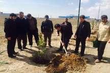 ایجاد 307 هکتار فضای سبز در شهرک ها و نواحی صنعتی آذربایجان شرقی