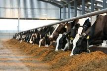 پنج میلیارد ریال یارانه حمل خوراک دام به سیستان پرداخت شد