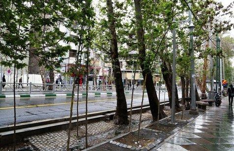 درخت هایی که مناسب تهران نیستند