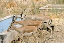 شکارچیان غیرمجاز در موته اصفهان دستگیر شدند