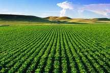 طرح آمارگیری هزینه تولید محصولات زراعی در جنوب کرمان اجرا شد