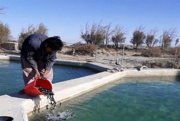 20هزار قطعه بچه ماهی در استخرهای ریگان رهاسازی شد