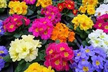 صادرات گل و گیاه زینتی نوشهر 40 درصد افزایش یافت