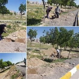 توسعه فضای سبز در شورابیل انجام میشود