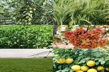 380 مقاله در همایش بین المللی کشاورزی دانشگاه جیرفت ارائه شد