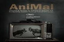 «حیوان» برنده جایزه بهترین فیلم کوتاه جشنواره آوانکای پرتغال