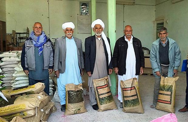 هشت تن بذر علوفه سورگوم در نیمروز توزیع شد
