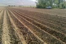 محصول 11 مزرعه آلوده به فاضلاب در دزفول معدوم شد