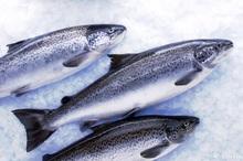 41 طرح پرورش ماهی در کهگیلویه و بویراحمد در دست اجراست