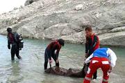 کشف جسد غرق شده رئیس سابق هیات کوهنوردی کوهدشت
