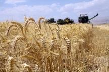 اطلاعات بیش از 129 هزار کشاورز کهگیلویه ثبت شد