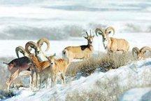 پرهیز از هر گونه آسیب به حیات وحش در فصل سرما