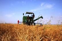 برداشت محصول غلات از مزارع گچساران آغاز شد
