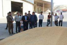 خروج گندم از میاندوآب ممنوع است