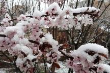 سرما 215 میلیارد ریال به باغ های مهاباد خسارت زد