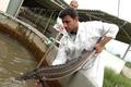 تولید ماهیان خاویاری در قزوین بیش از چهار برابر رشد یافت