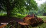 تصویب قانونی که تبر بر ریشه درختان ایران می زند