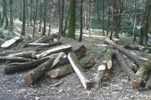 دادستان رشت: جنگلهای گیلان در تاریکی شب غارت می شوند