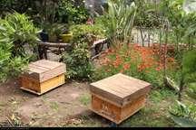 آمارگیری کلنی ها و زنبورستان های گیلان پایان یافت