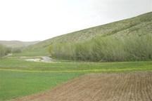 176 پلاک از اراضی ملی بانه با زمین کشاورزی تداخل دارد