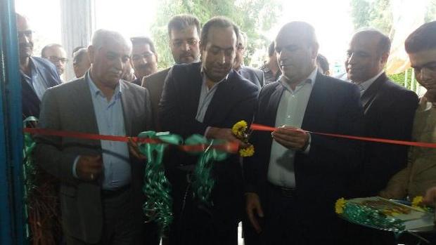 سهم 24 میلیون دلاری ایران از بازار 20 میلیاردی گل و گیاه زینتی