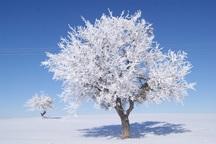 تکاب با دمای 10 درجه زیر صفر سردترین شهر آذربایجان غربی بود