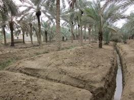 شوری آب حیات 2 میلیون نخل آبادان را تهدید میکند