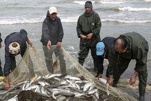 بازگشت آرام ماهی آزاد دریای خزر به تور صیادان مازندران